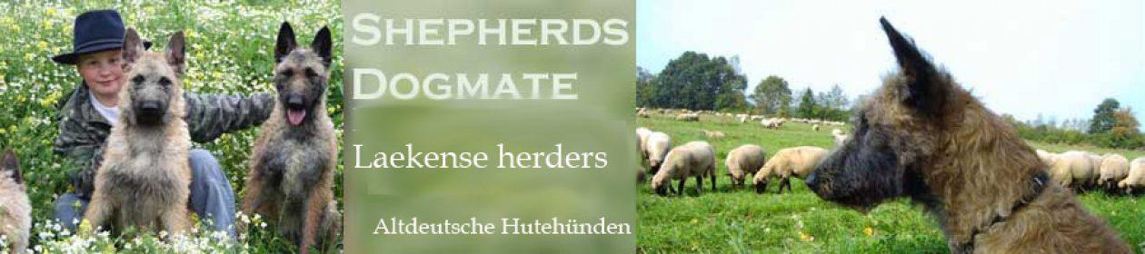 Herdershonden en meer …